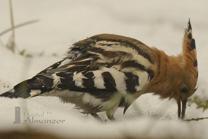 Birding 12