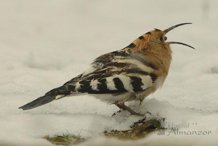 Birding 14