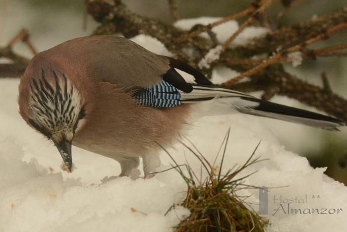 Birding 15