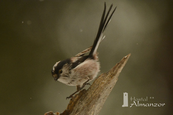 Birding 4