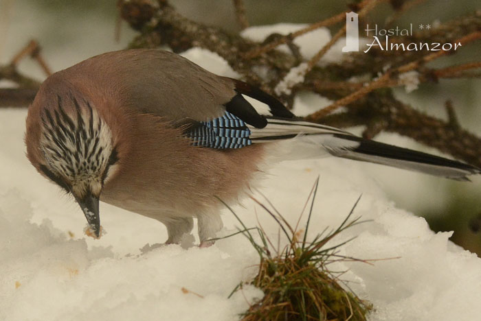 Birding 5