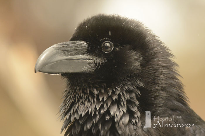 Birding 8