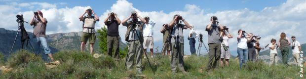 codigo-etico-observadores-de-aves