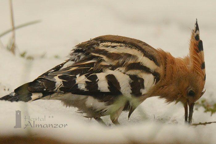 cómo sobreviven las aves en invierno