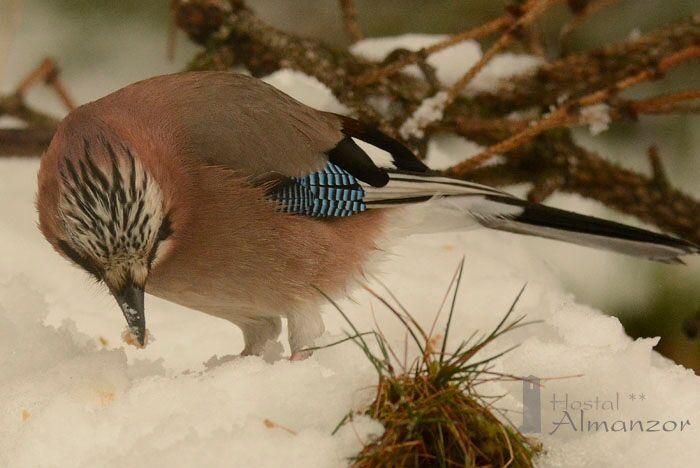 como sobreviven las aven en invierno