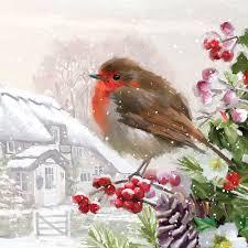 por que el petirrojo es el pajaro de la navidad