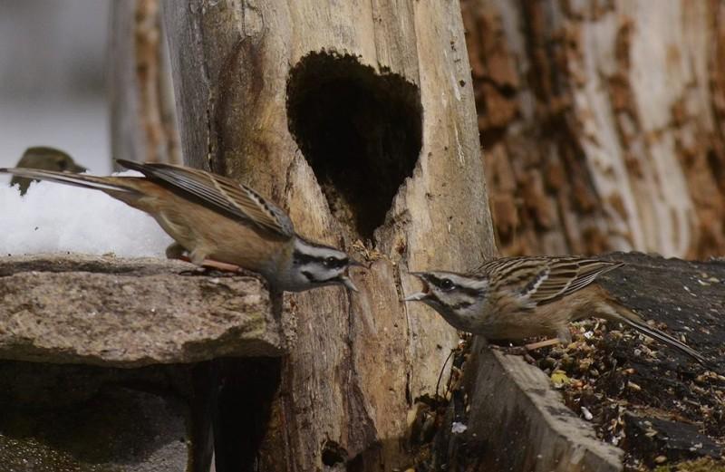 las aves y el cambio climatico