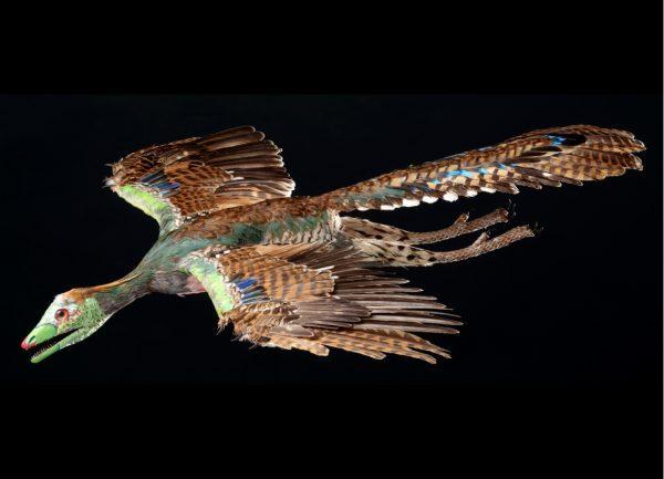 Las aves y el cambio climático