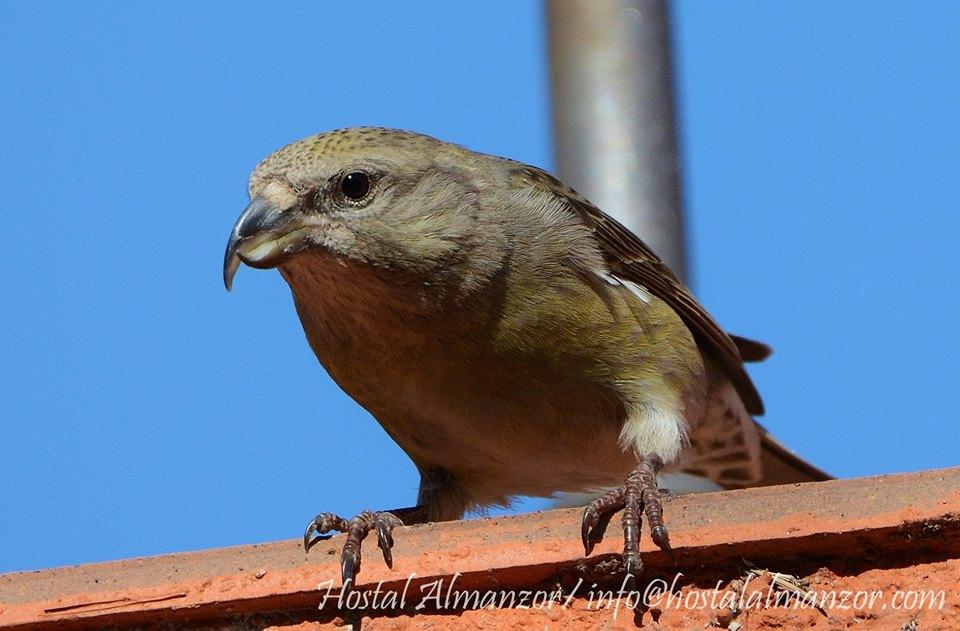 cómo comenzar a observar aves