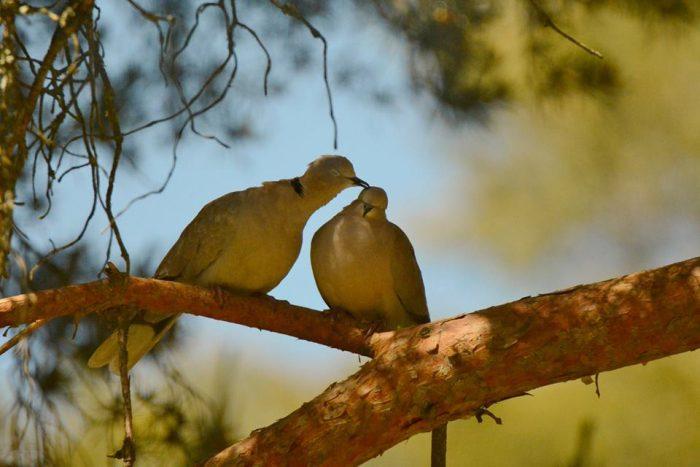 Cómo influye la primavera en las aves
