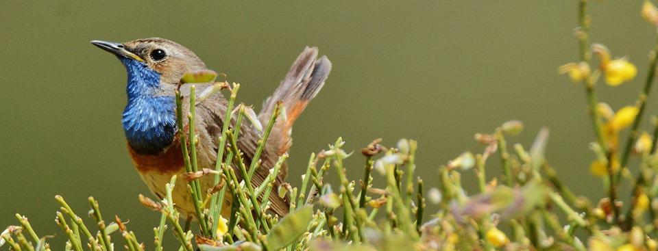 Turismo ornitológico en Gredos
